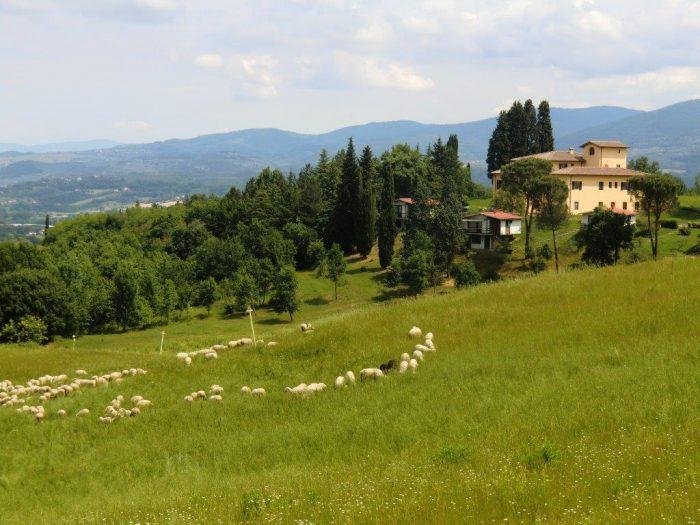 Campogiallo - Loppiano - Firenze