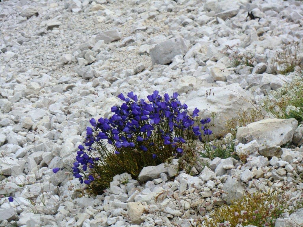 ...fa fiorire il deserto