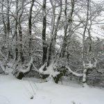 Neve sulle Alpi-2